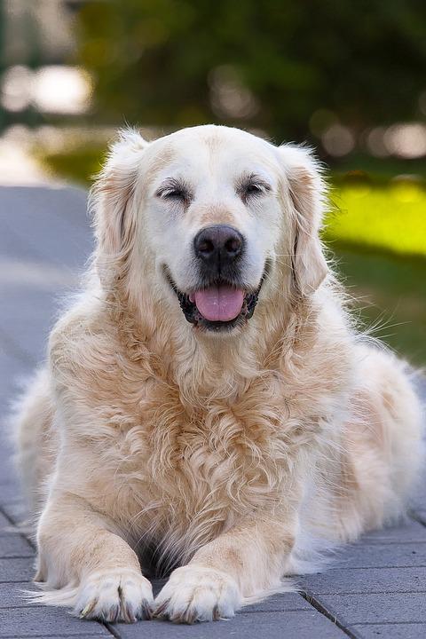 dog-3080258_960_720